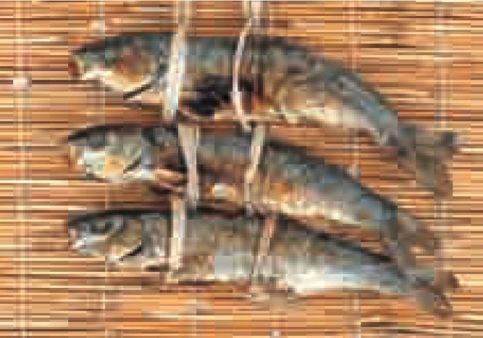 Grilled/dried Japanese dace