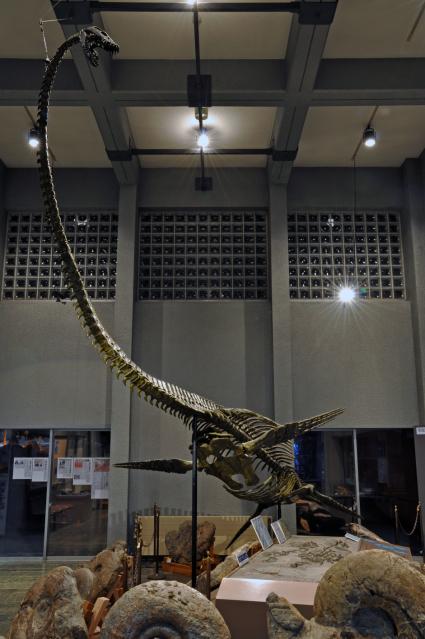 Hobetsu Araki Ryu (plesiosaurus)