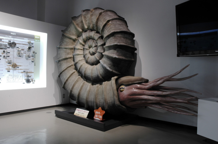 Restored model of an ammonite