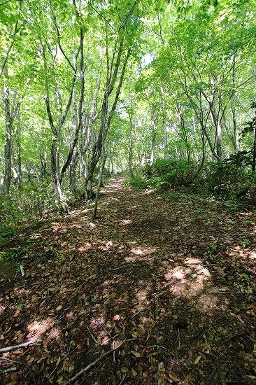 Utasai Siebold's beech forests