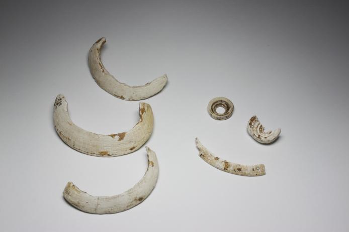 Irie-Takasago Shell Midden: Shell bracelets