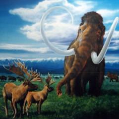 氷河期の北海道の想像図