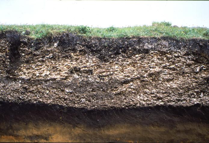 東釧路貝塚:貝塚の断面