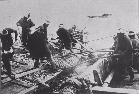 明治時代、古平沖でのニシン漁の様子